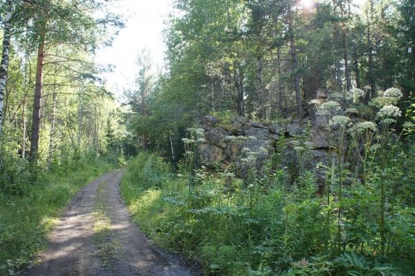 Дорога по бывшей узкоколейке