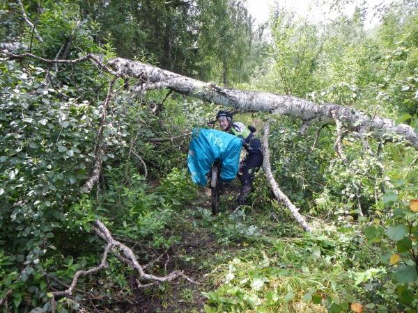 Пролаз под поваленным деревом
